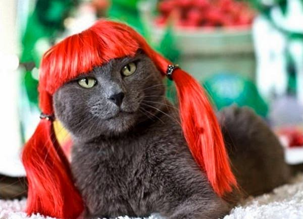 wtf fashion style, Cat red wig
