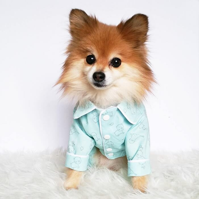 cute dog clothes for large dogs